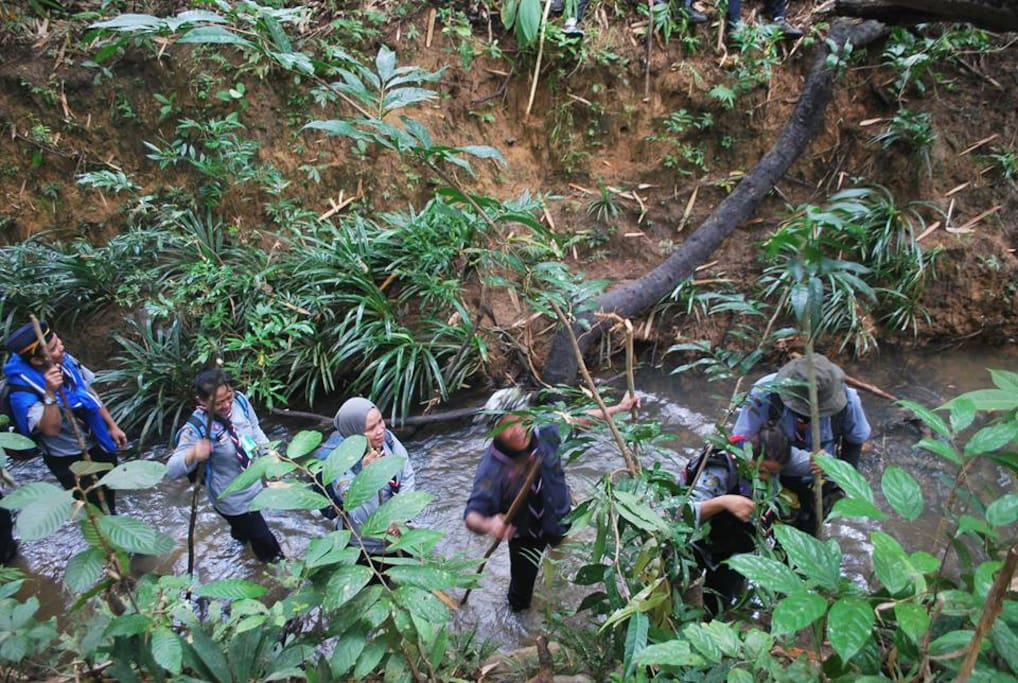 Jungle trekking as part of the activity