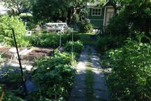 Koloniträdgården