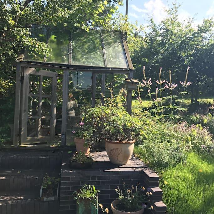 Drivhus med druer og malergrej