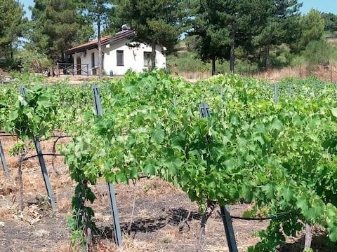 Etnasentieri Vineyard Rural tourism