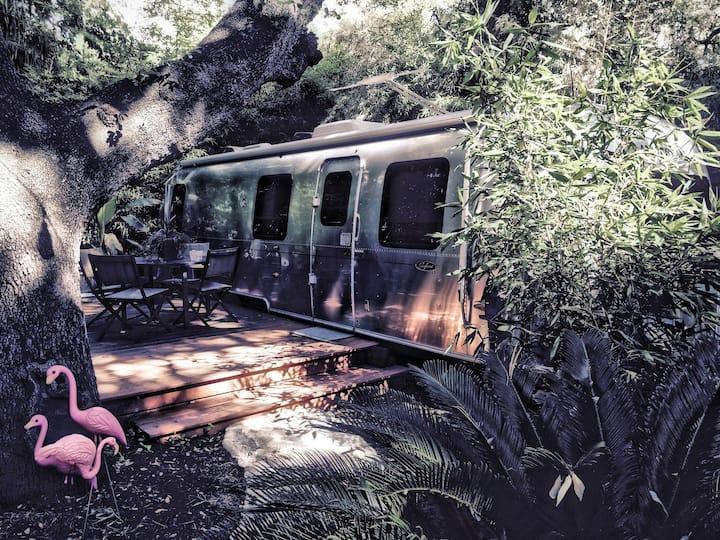 Camp Congress (Safari)