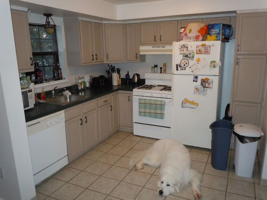 dog not included :)  gas range, dishwasher, disposal included