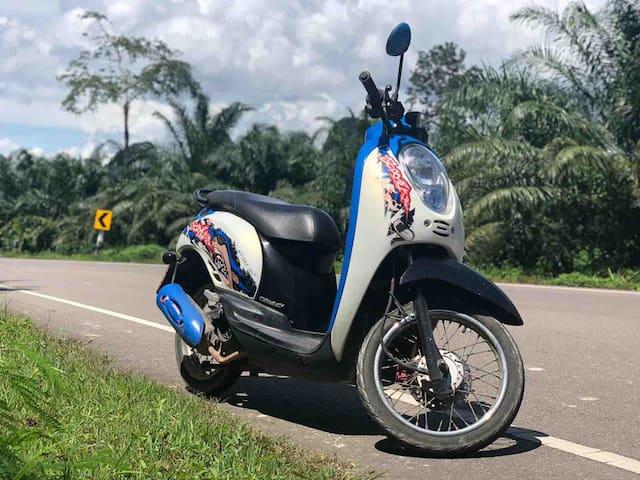 !!!Motobike&CosyCoconutJungleViewCondo Aonang 1415