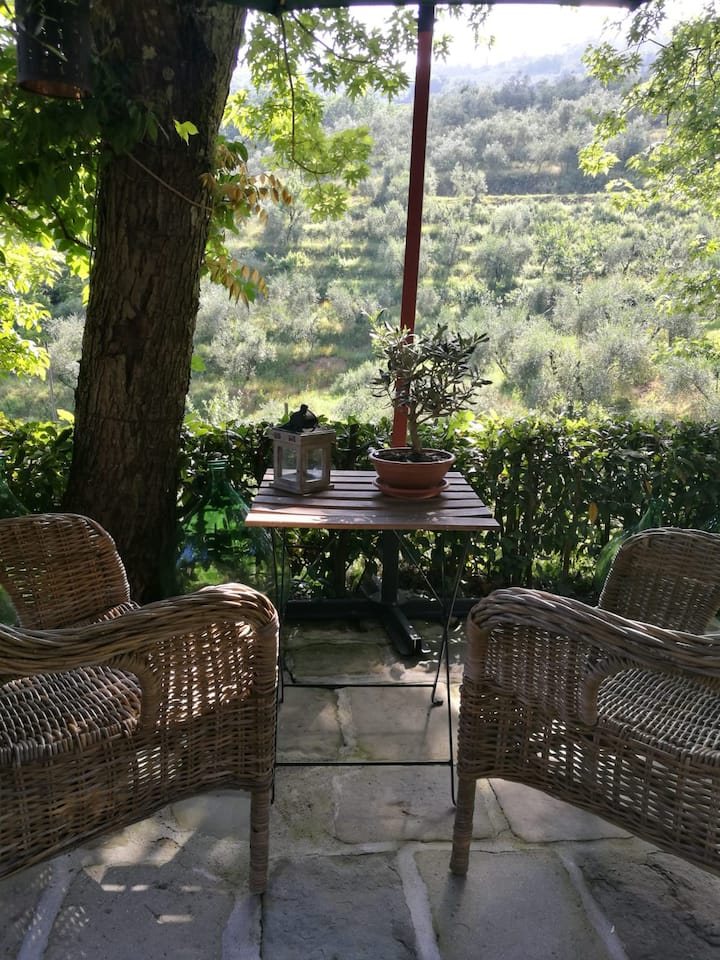 Our terrace on the olive grove