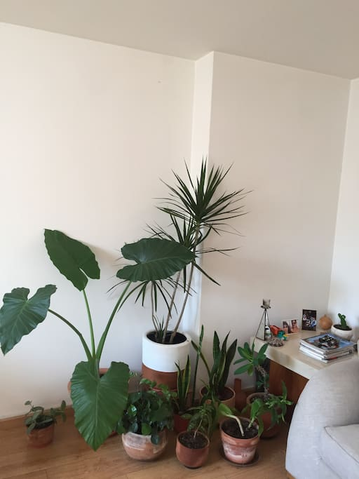 We like plants. The apartment is filled with them ;)