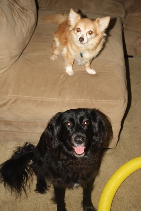 Piquito and Lily are our welcoming committee. They each have over 10 years of experience.