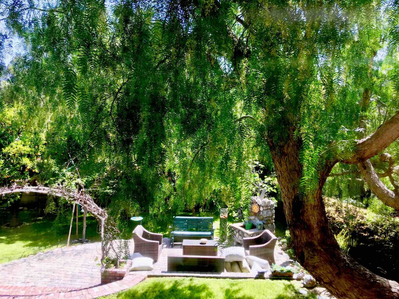 gorgeous pepper tree