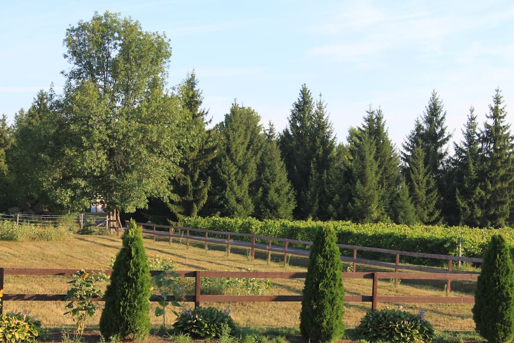 view of the vineyard from the bedroom windows