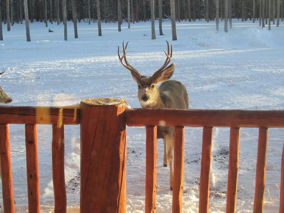 This buck (and 8 of his other friends) greeted us most mornings while there in December-January.