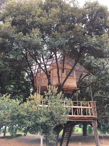 木の上の小屋