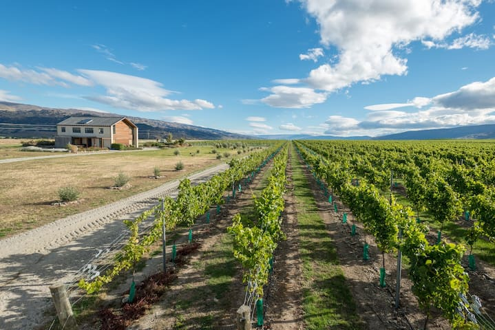 Locharburn Vineyard Homestay