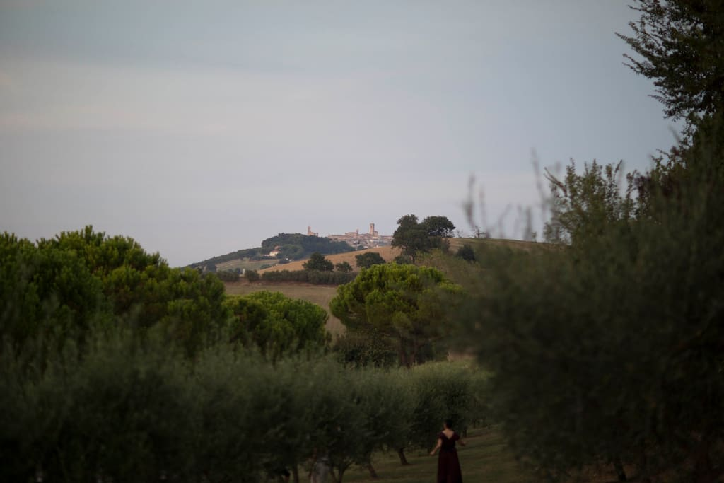 Vista dall'uliveto / View from the olive tree garden