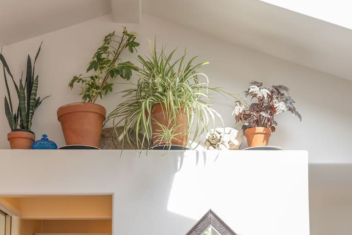 Sunlight from the skylights on our happy house plants. We've made choices to make our cottage feel like home.