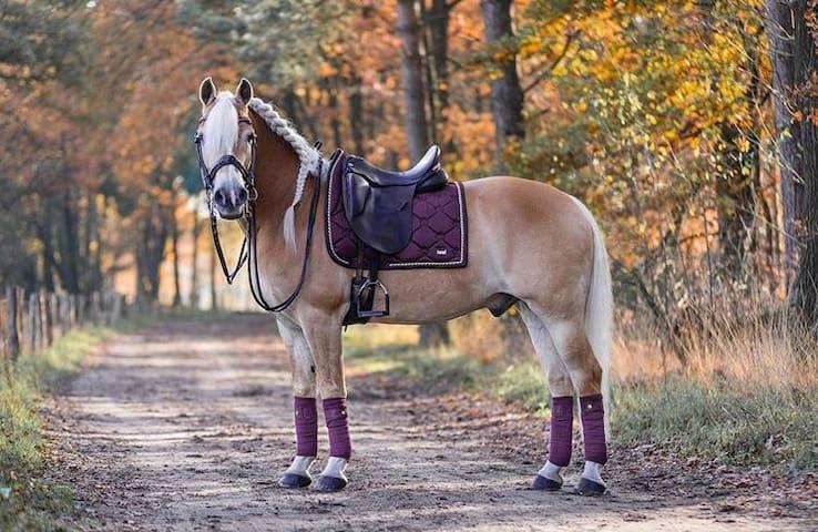 Nadstandartní byt s možností jízdy na koni