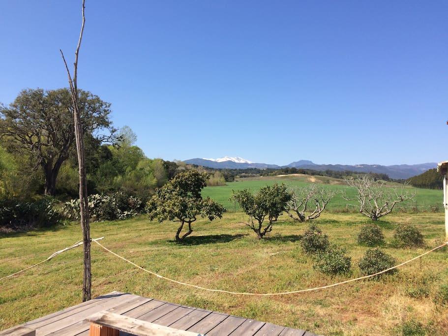 Face au champs de blé, avec a gauche le maquis, derrière les pruniers bio et a droite la ferme