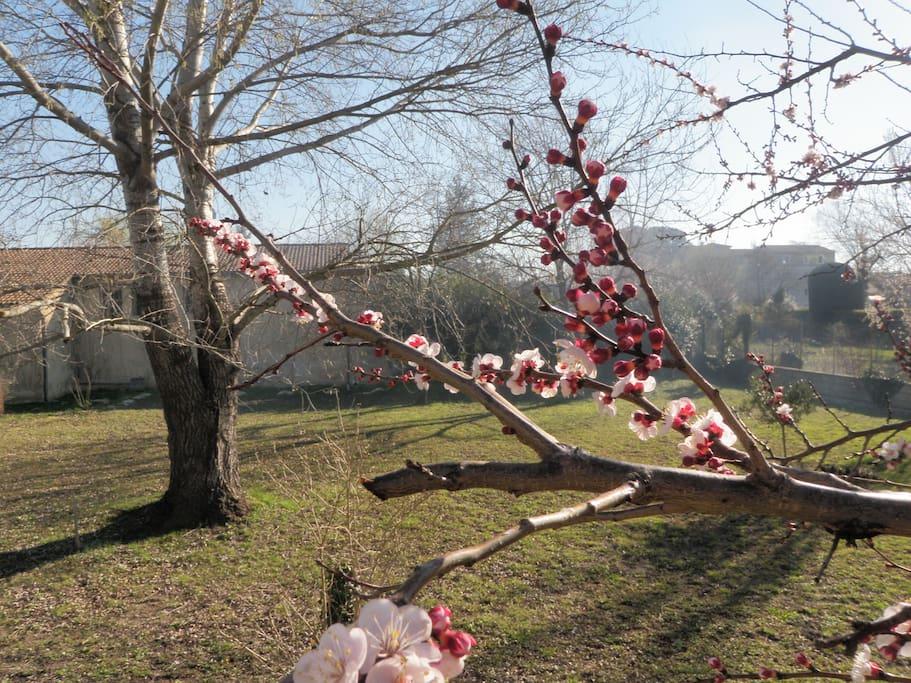 Jardin au printemps, vu de la terrasse.