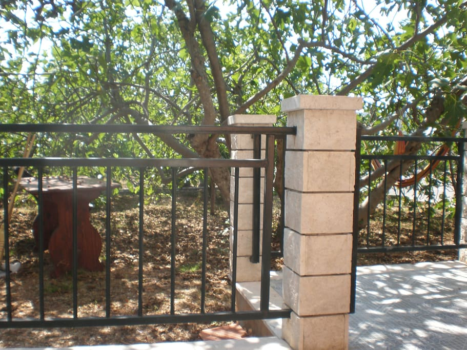 view in the garden, where you can sit in the shadow of the fig trees