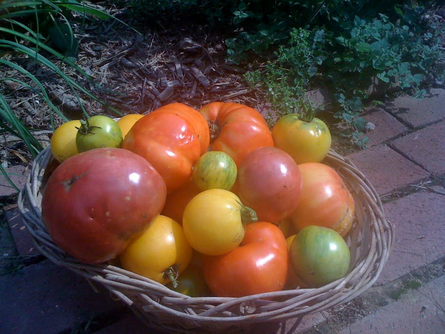 Heirloom tomatoes from the garden...