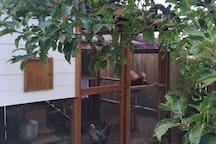 Access to the backyard chicken coop and fresh eggs daily. Fry up some eggs with toast in the tiny house for a light breakfast before heading out to explore Portland.