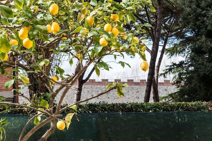 Lemon House GREEN