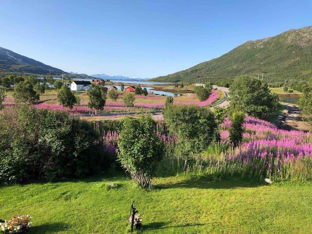 Great experience base for Lofoten and Vesterålen