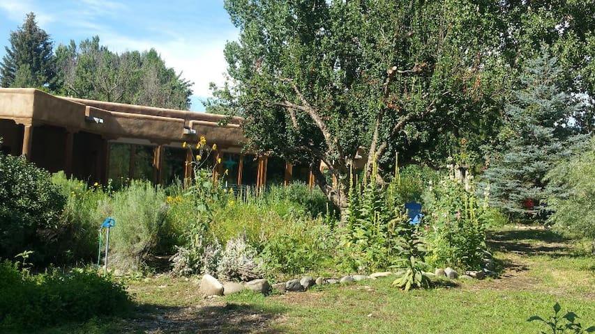 Taos/Arroyo Hondo Valley, Hondo River, wildflower