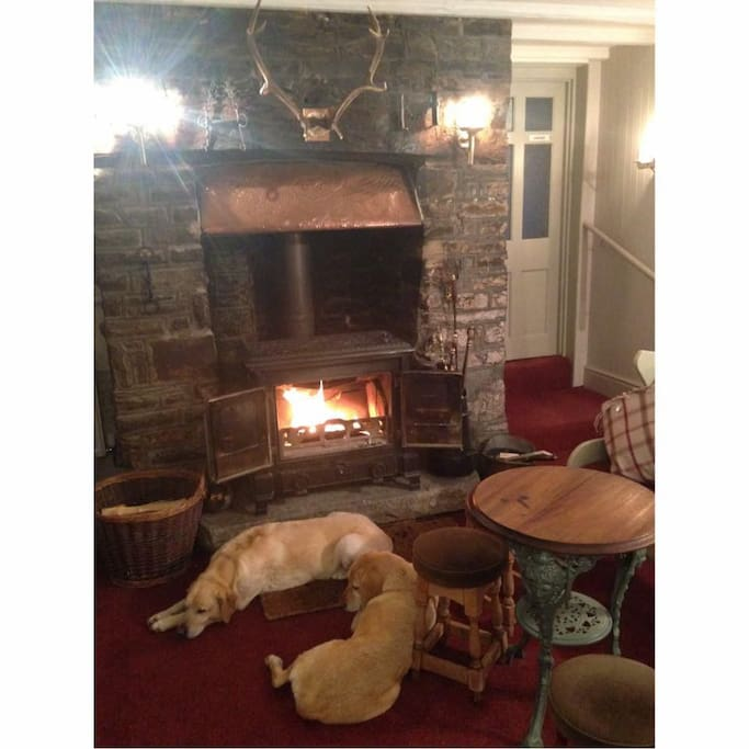 Dogs chilin by the fire