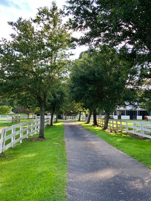 Driveway to the Barn