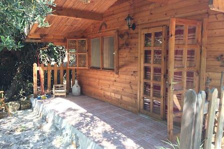 Small house in Terrasini-Cinisi - Cinisi