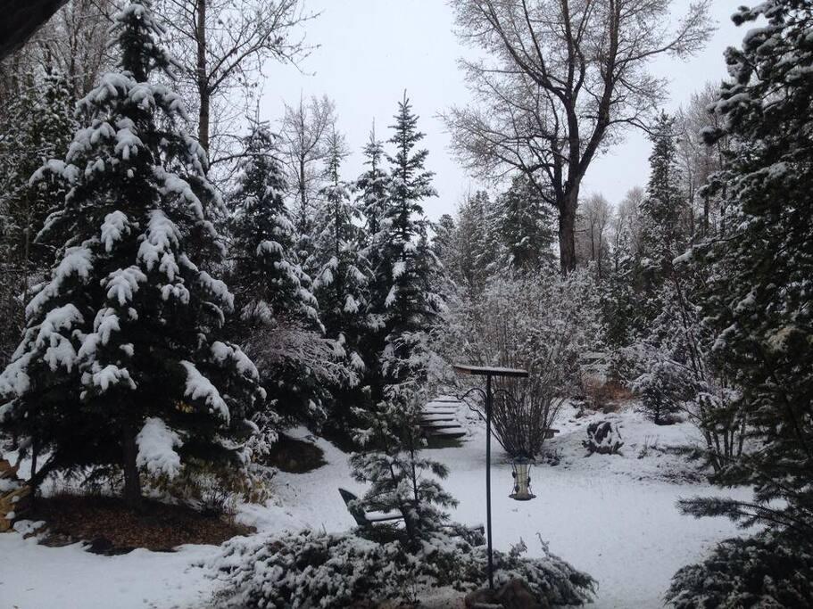 Birds, beavers, moose, pine martens, fox,  live nearby
