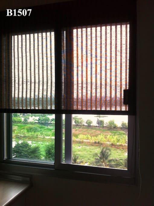 The window shade