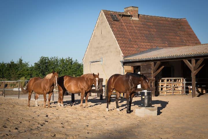 Urlaub in der Natur - Heckelberg-Brunow - House