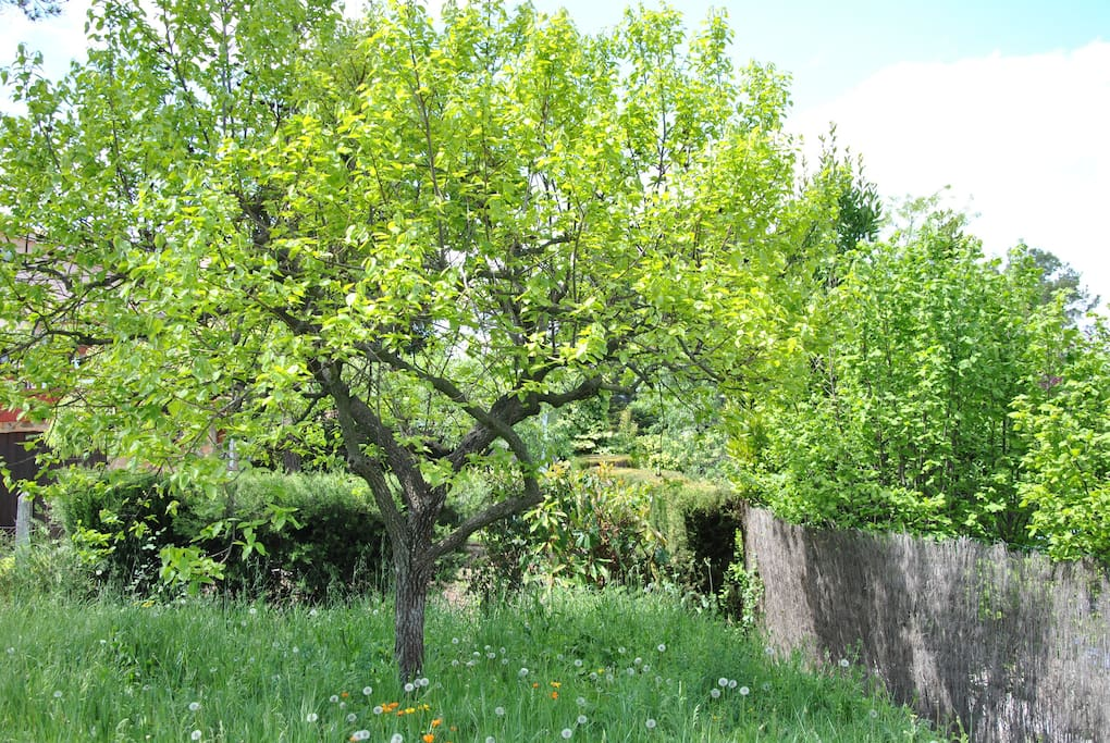natural garden with fruit trees