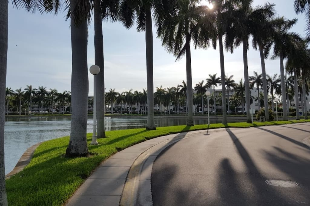 Palm tree lined roads