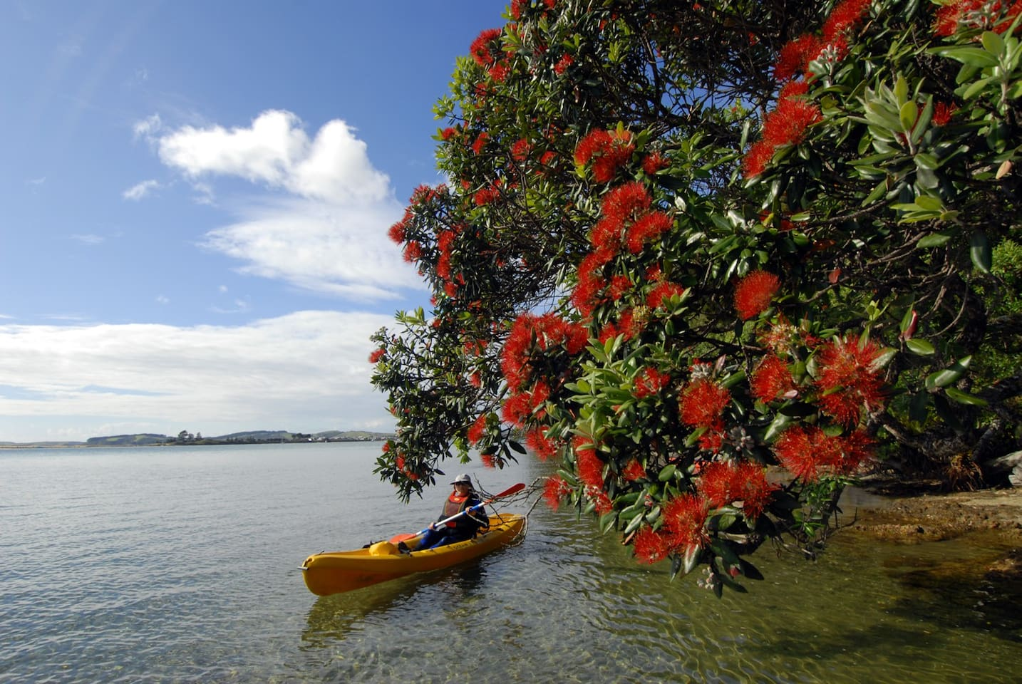 We have kayaks at Matheson Bay that guests can use.