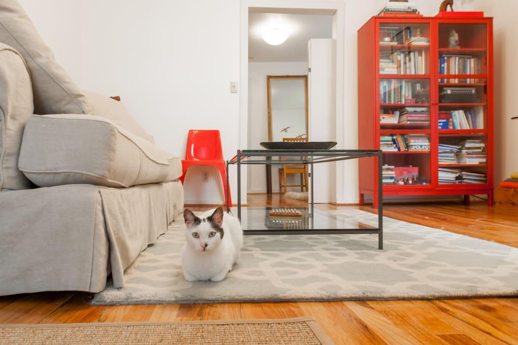 Harry the Cat.