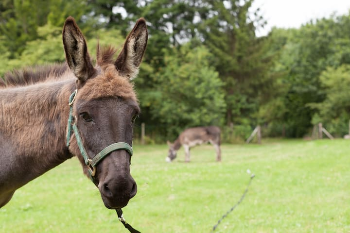 Our friendly donkeys, Sam & Frodo