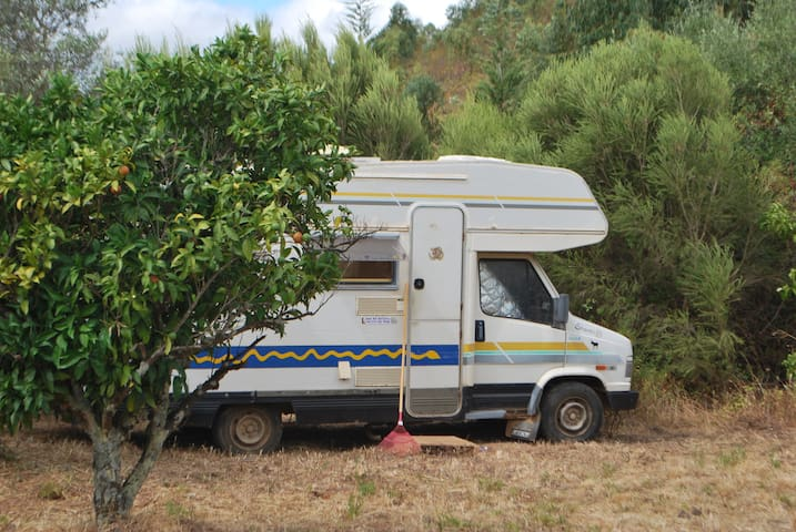 Shanti the retired camper van - Silves - Trailer