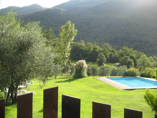 the swimming pool (14mtsx 7 )