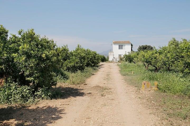 Rural house among orange trees