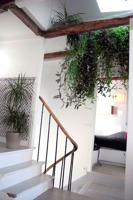 Plants coming down from the ceiling and entrance to small Broom