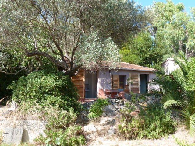 Under the olive tree - Sanary-sur-Mer - Talo