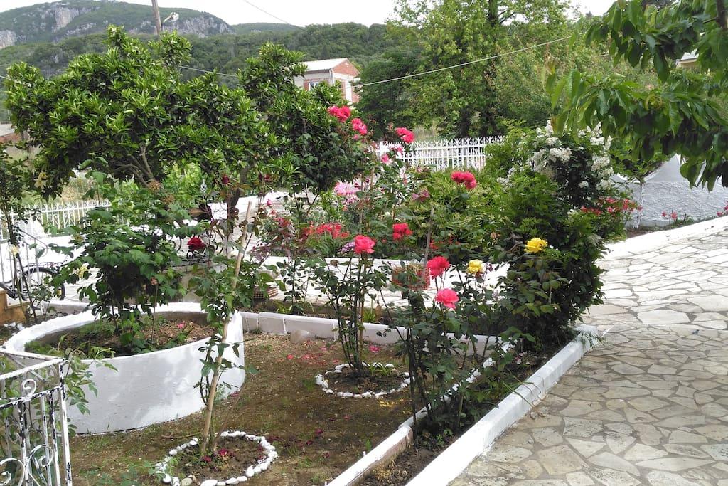 Θέα κήπου απο τη βεράντα- View of the garden