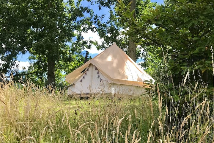 Bell Tent - Blackcurrant