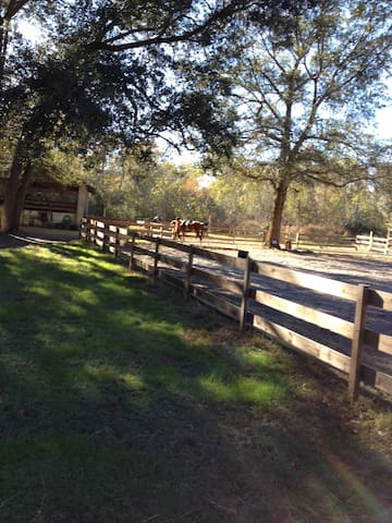 Horse Farm near everything
