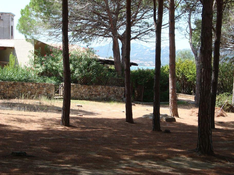 Vista esterna dalla pineta