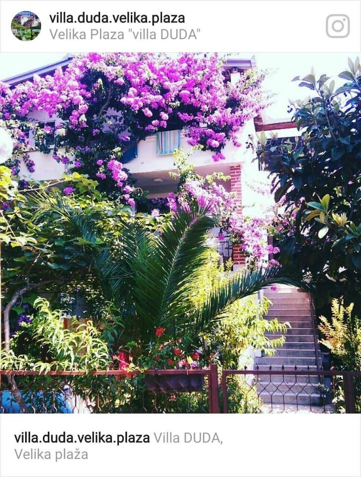 One picture of Villa Dude from our Instagram profile, add us .. Jedna slika Ville Duda sa našeg Instagram profila, dodajte nas..