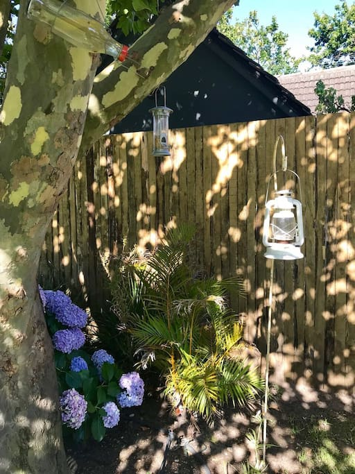 Charming cottage with big tree just outside the fence - lovely sound of birds chirping with a regular appearance of the resident squirrel