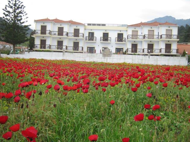 Villa Agios Studios - Samos - Lakás