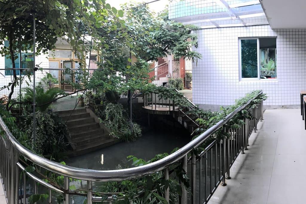 院子,池塘